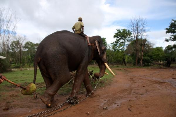 Sakrebailu Elephant Camp